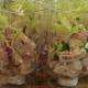 Hollandse garnalen salade